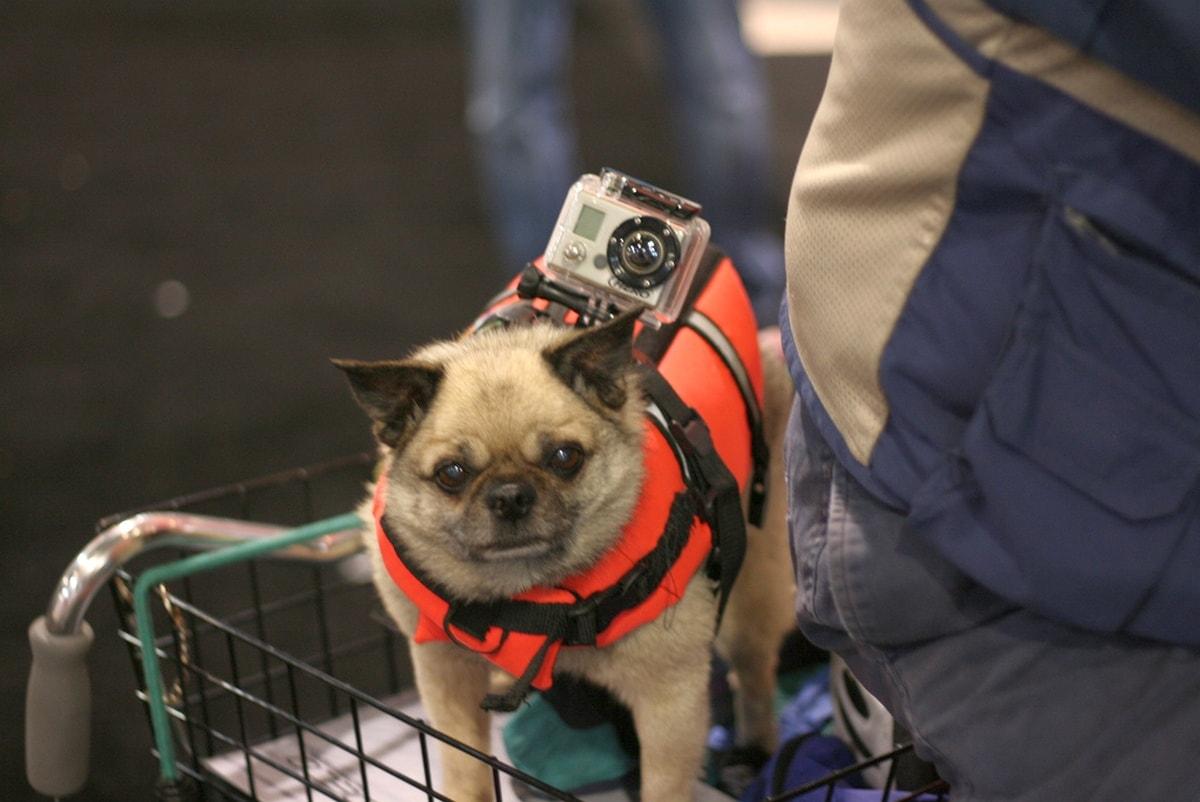 Камера GoPro и собака
